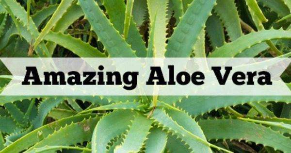 Benefits of using aloe vera in your natural skincare products