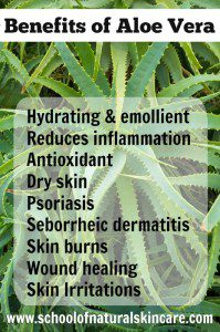Benefits of using aloe vera in your natural skincare products Natural Skincare Ingredients