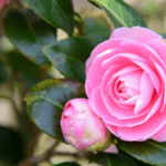 13 Natural anti-aging skin care secrets formulators swear by
